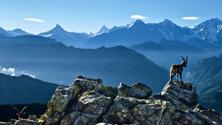 Berner Oberland - Güggisgrat oberhalb Interlaken